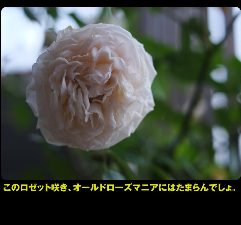 b0315480_19575012.jpg