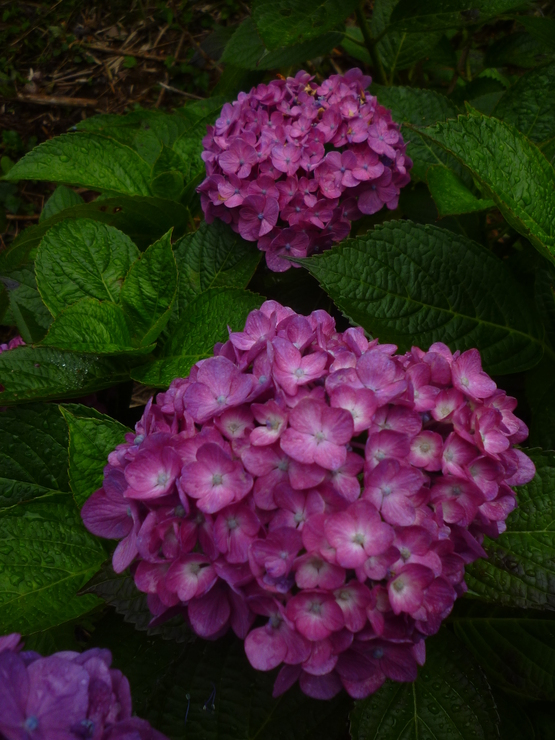 紫陽花の旅_a0225587_16302163.jpg