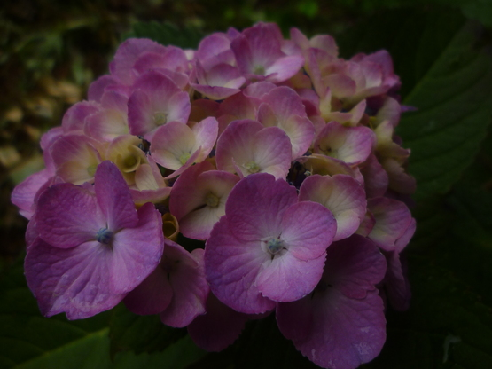紫陽花の旅_a0225587_16314476.jpg