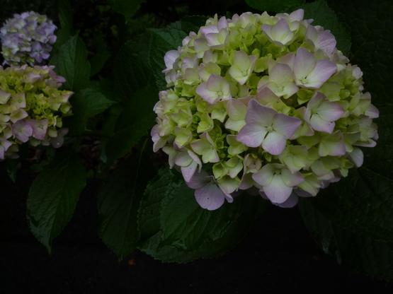 紫陽花の旅_a0225587_16412591.jpg