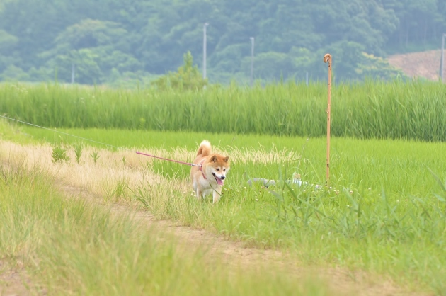 佐倉ラベンダー園_a0126590_20250699.jpg