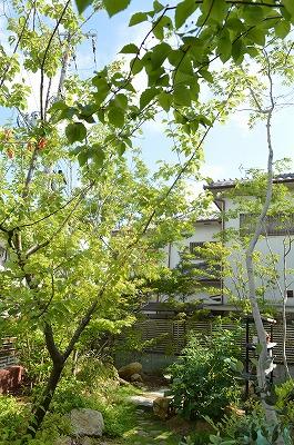 2014.初夏のお手入れ_a0233896_22541511.jpg