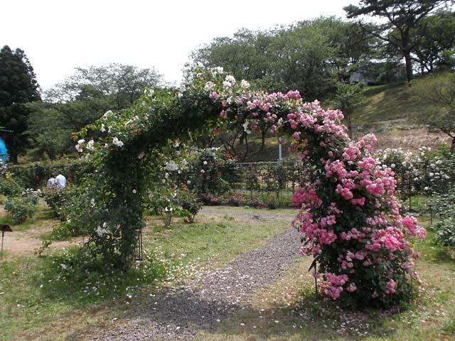 日本国花苑 秋田県井川町_f0019498_1554735.jpg