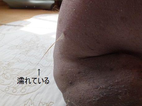 f0179203_1595999.jpg