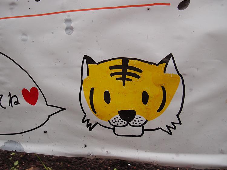 2014.6.22 宇都宮動物園☆アムールトラのチグ【Tiger】_f0250322_2281453.jpg