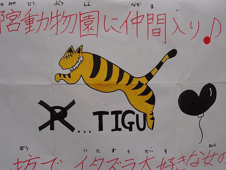 2014.6.22 宇都宮動物園☆アムールトラのチグ【Tiger】_f0250322_2281782.jpg