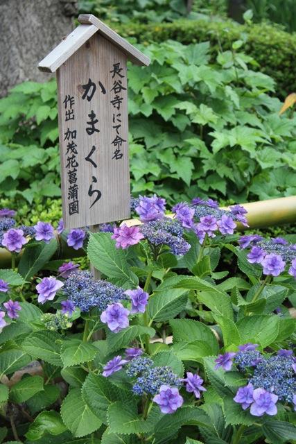【長谷寺】鎌倉散策 part 1_f0348831_20465818.jpg