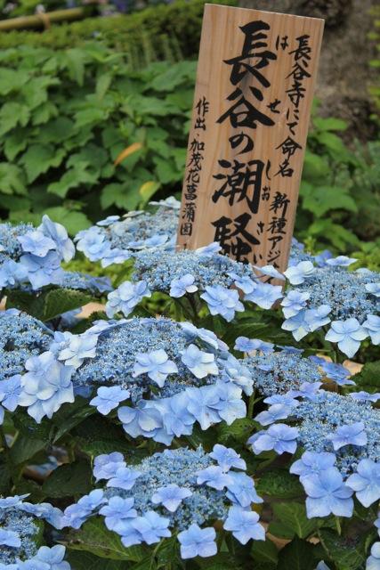 【長谷寺】鎌倉散策 part 1_f0348831_20470780.jpg