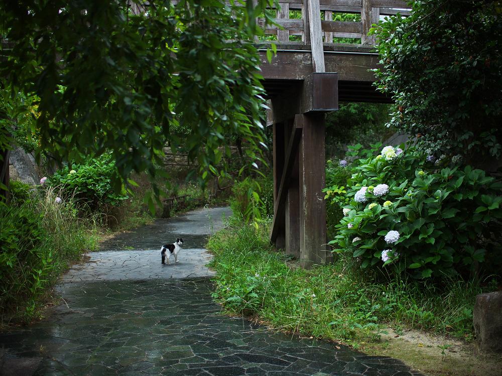 紫陽花 2014  中書島                         _f0021869_22503236.jpg