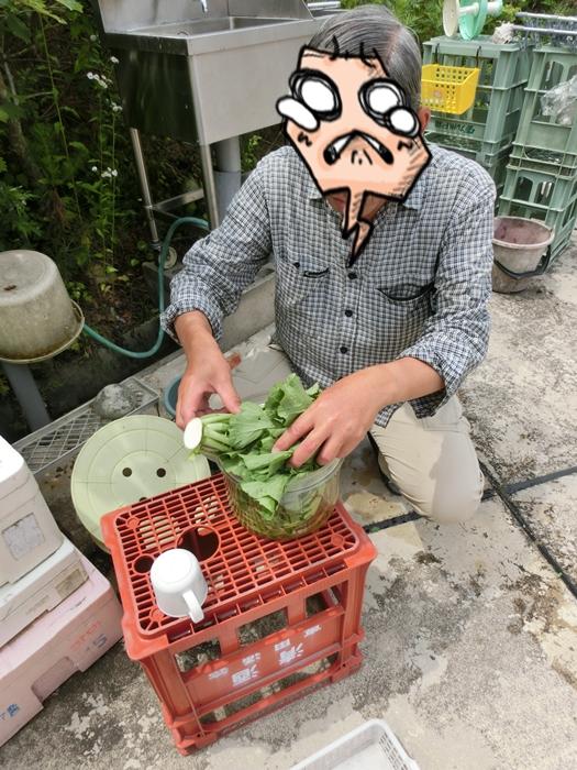 高級蒲鉾とタダ食材!!_a0199979_17134155.jpg