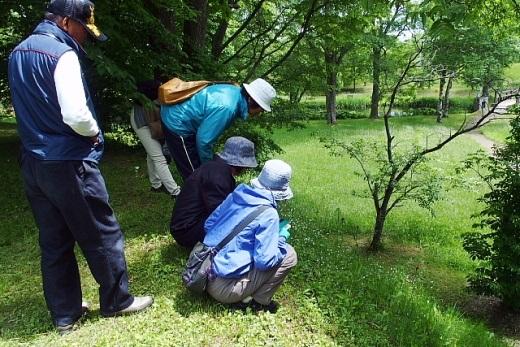 2014年6月24日(火):丸山公園の池で初めての水辺調査[中標津町郷土館]_e0062415_19541451.jpg