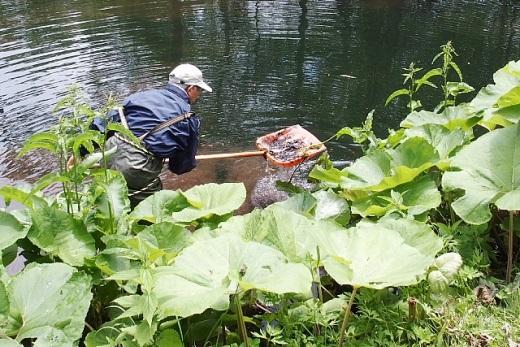 2014年6月24日(火):丸山公園の池で初めての水辺調査[中標津町郷土館]_e0062415_19582044.jpg
