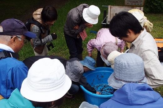 2014年6月24日(火):丸山公園の池で初めての水辺調査[中標津町郷土館]_e0062415_19583591.jpg