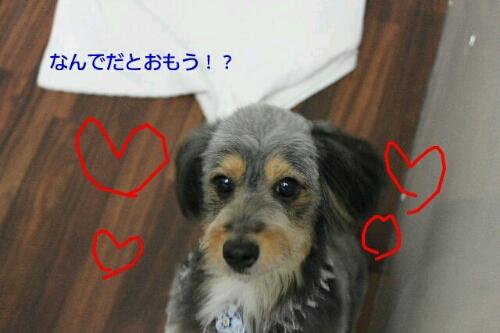 b0130018_02056.jpg