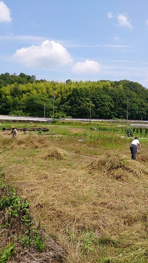 草刈りです。。。暑いです・・・くたびれました。。。_f0065444_20295665.jpg