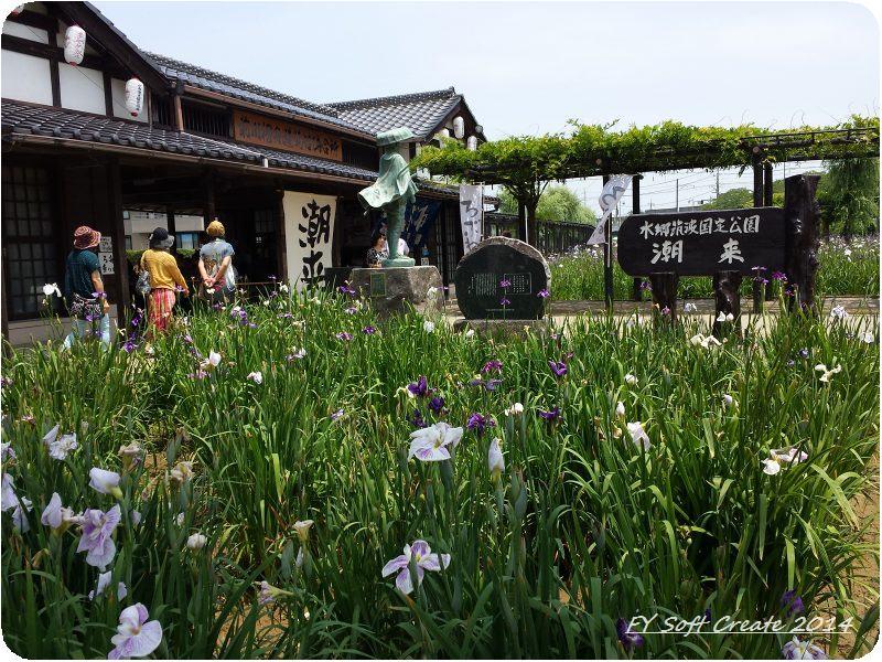 ◆ 「水郷潮来あやめまつり」から「鹿島神宮」へ、その1 (2014年6月)_d0316868_921753.jpg