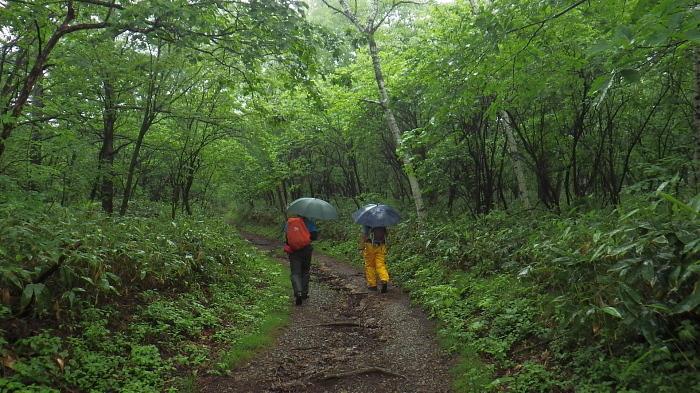 カッパと傘で行く雨の芳ヶ平_e0292469_17461630.jpg