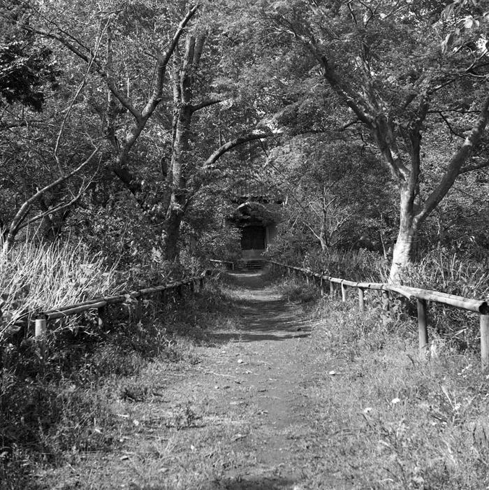 緑のトンネル_a0281778_22252843.jpg