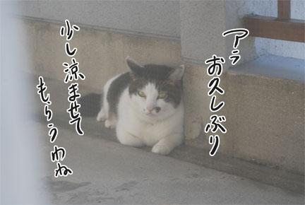 f0172285_2093351.jpg