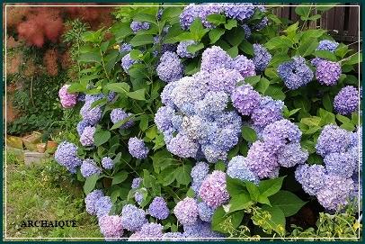 *アナベル:紫陽花*_c0207890_15154194.jpg