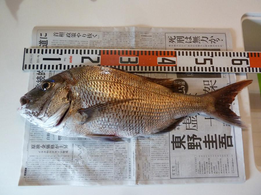 大きい「真鯛」が釣れました!_f0150893_10391597.jpg