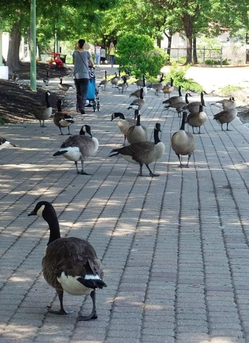 ミツワNJ店に行くのがもっと楽しくなるハドソン川の遊歩道_b0007805_20142029.jpg