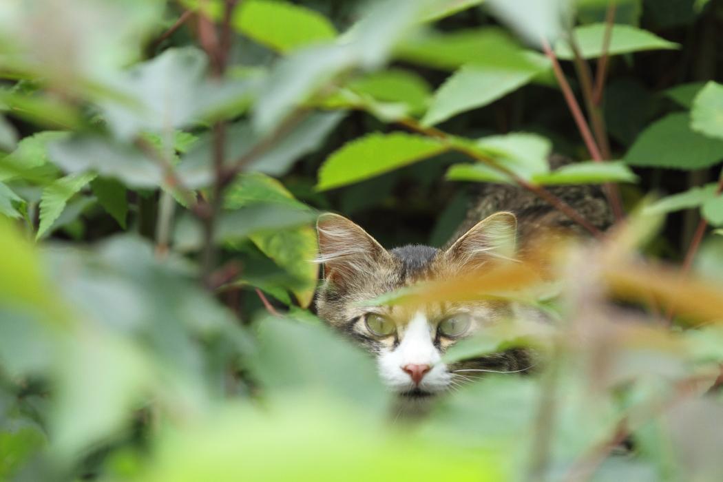 ある日、森の中、猫さんに出会った_b0190710_2314717.jpg