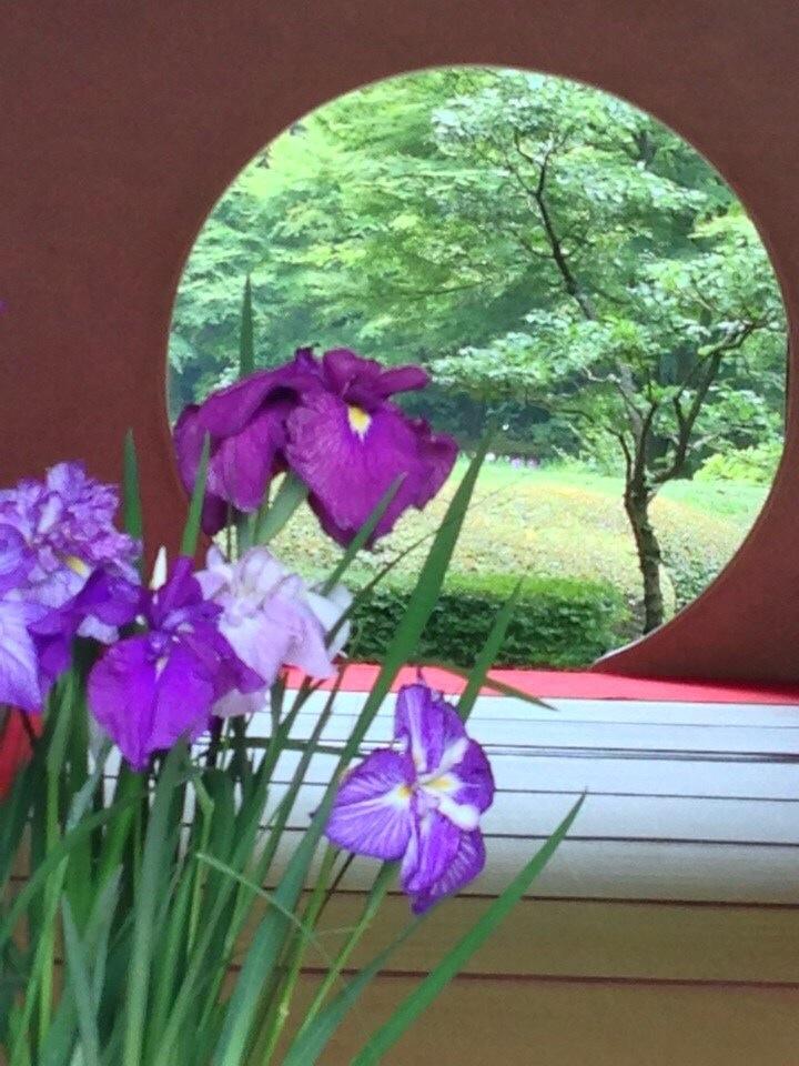 2014 6月 紫陽花散策 明月院_f0062122_713974.jpg