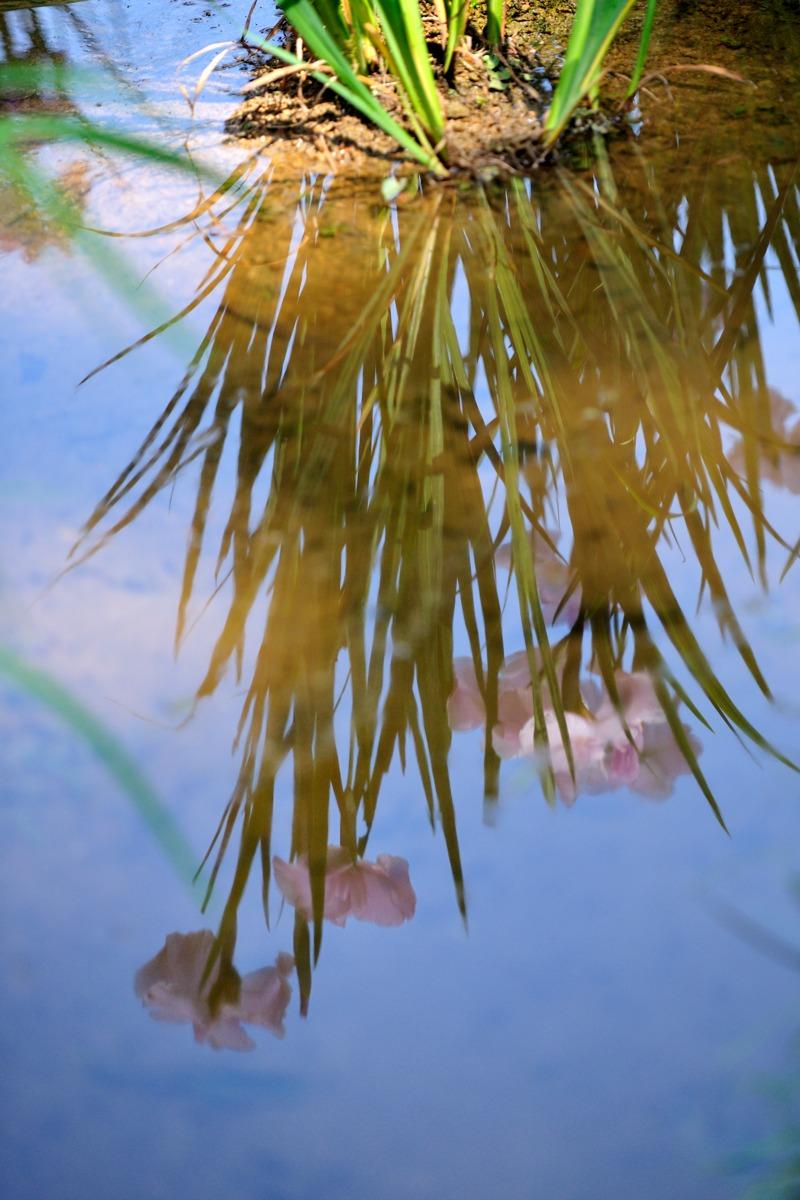 水中花_c0220824_190275.jpg