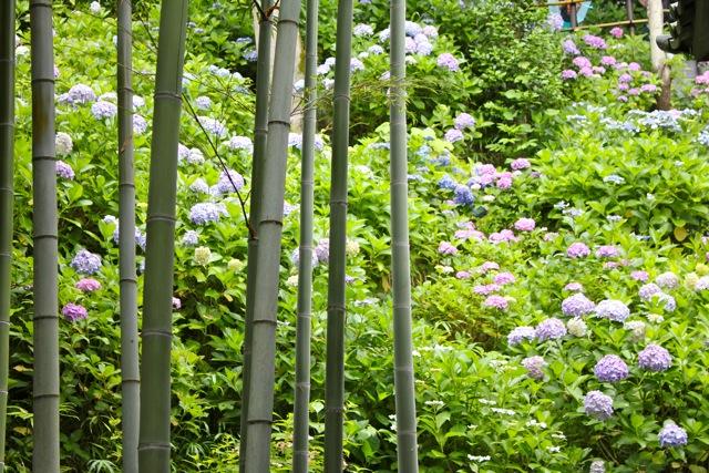 【長谷寺】鎌倉散策 part 3_f0348831_17415707.jpg