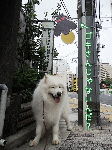 きのうの朝散歩_c0062832_65384.jpg