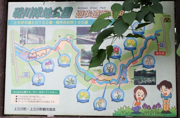 上三川 磯川緑地公園でアジサイ撮影会_e0227942_22574057.jpg