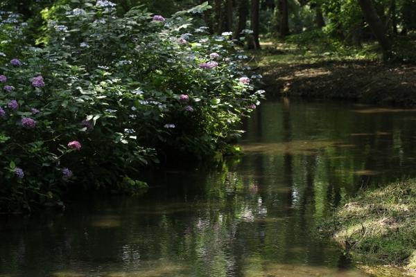 上三川 磯川緑地公園でアジサイ撮影会_e0227942_23140690.jpg