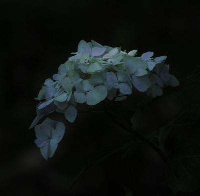 上三川 磯川緑地公園でアジサイ撮影会_e0227942_23183805.jpg