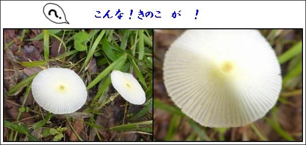f0224350_11495748.jpg