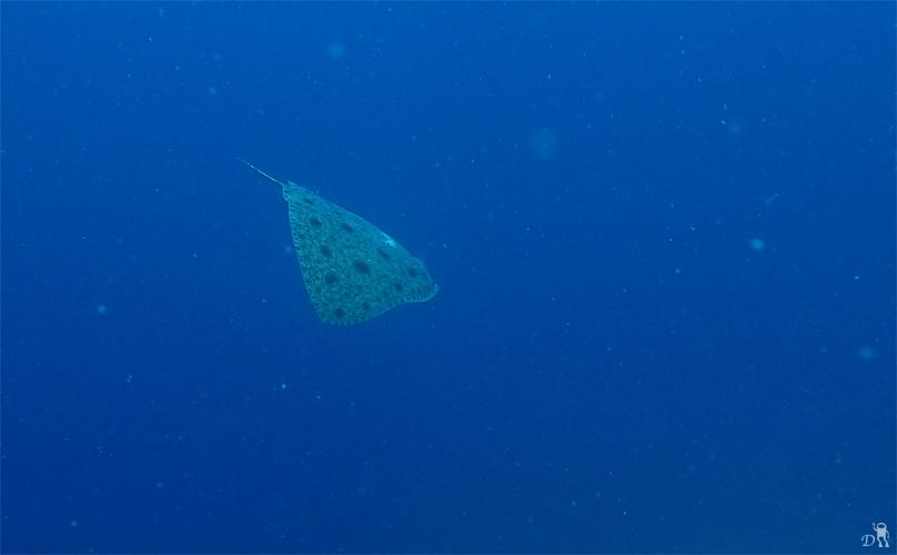 西崎サンゴ...☆みなべ・田辺_e0158261_656031.jpg