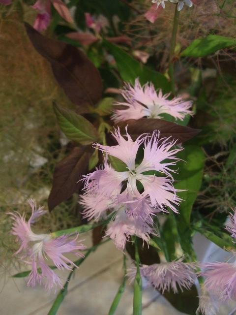 オークリーフ花の教室(甘艸さんと大草さんの作品)_f0049672_15592158.jpg
