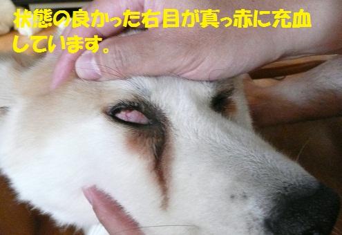 f0121712_14401775.jpg