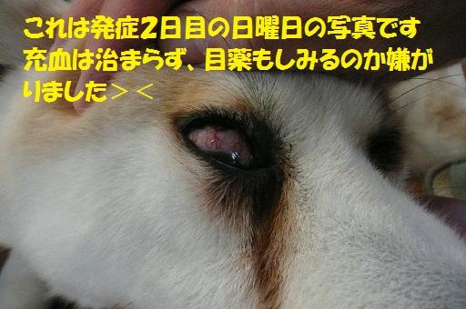 f0121712_15145719.jpg