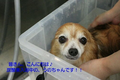 b0130018_16254060.jpg