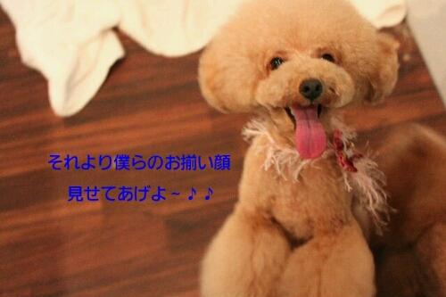 b0130018_20111981.jpg