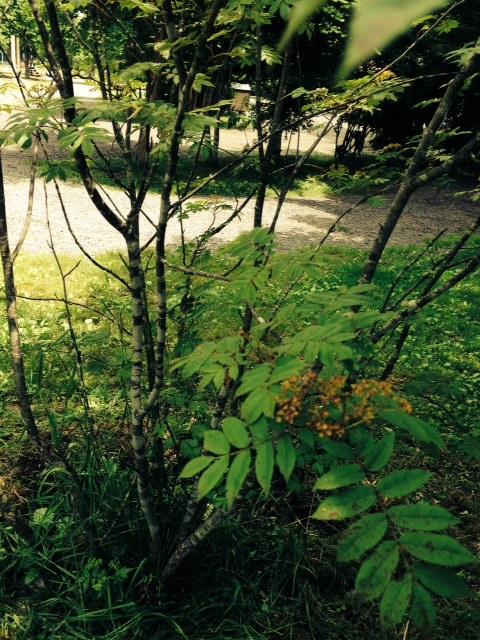 場内の植物さん_b0174425_1849883.jpg