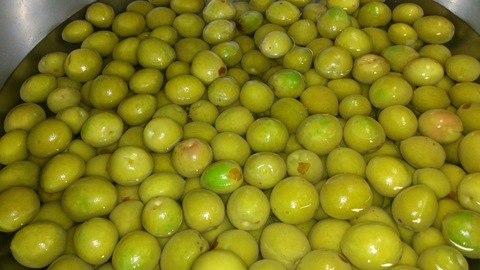 梅の収穫_d0182179_15253486.jpg