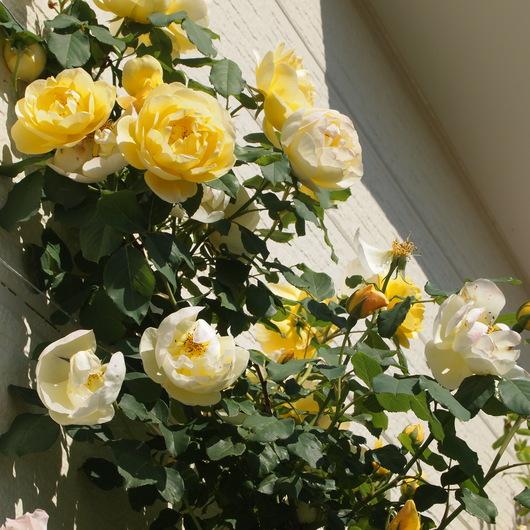 お客様のお庭訪問_a0292194_1950355.jpg