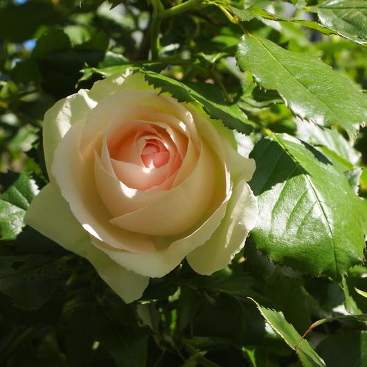 お客様のお庭訪問_a0292194_20155512.jpg