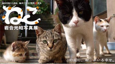 ☆次の休みは☆_a0059209_1542815.jpg