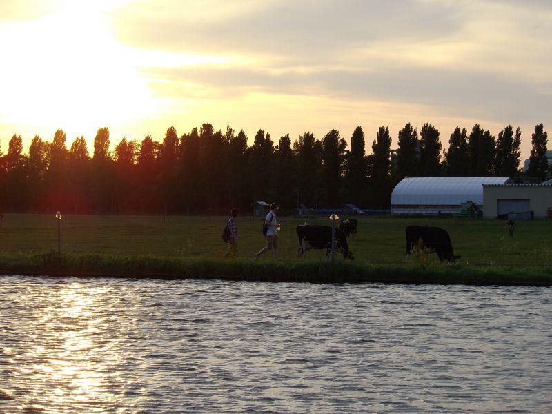 農場に大池出現_c0025115_19465966.jpg