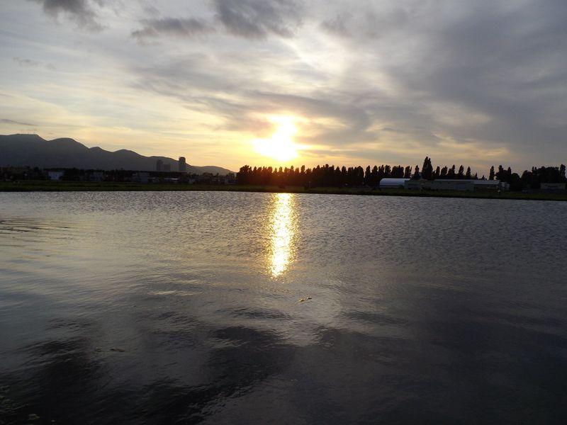 農場に大池出現_c0025115_194724.jpg