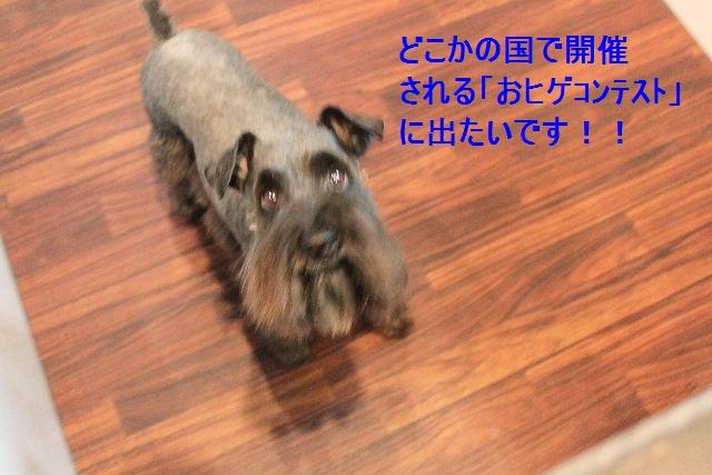b0130018_1025480.jpg