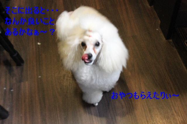 b0130018_958359.jpg